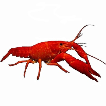 Crayfish Whole 500g/Ask